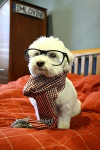 Hipster Dog The Second
